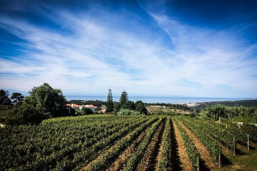 Magical Sintra & Colares' Wines