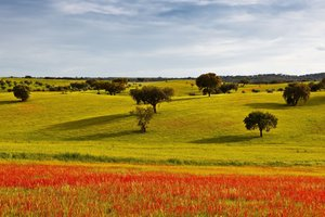 Alentejo – Land of Flavours