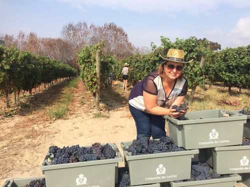 Wine Harvest at Lezirias do Tejo- only 1 hour from Lisbon